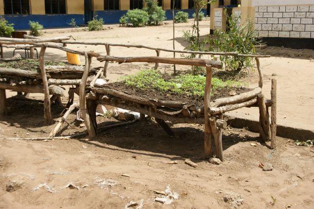 2017 Nursery om later uit te zaaien in groentetuin Menzamwenye Primary